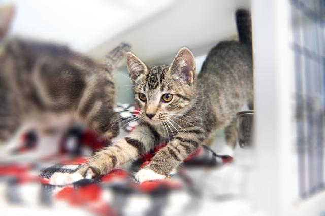 My name is Melba Toast and I am ready for adoption. Learn more about me!