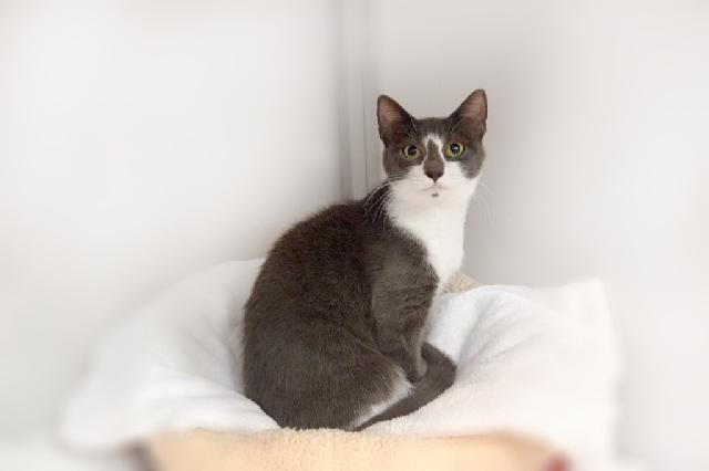 My name is Cheesecake and I am ready for adoption. Learn more about me!