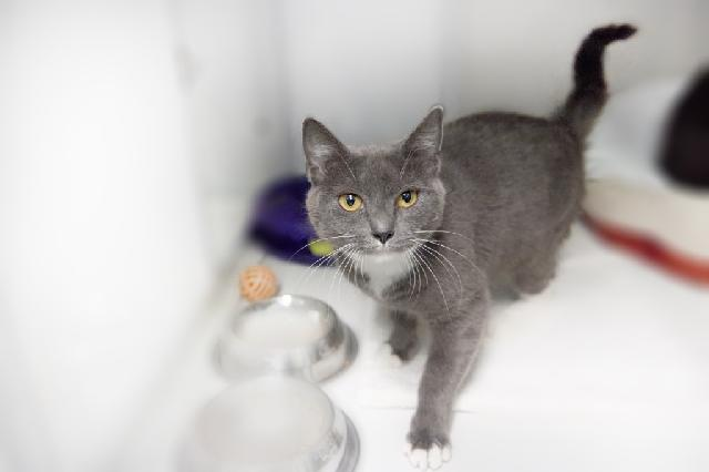 My name is Lava Cake and I am ready for adoption. Learn more about me!