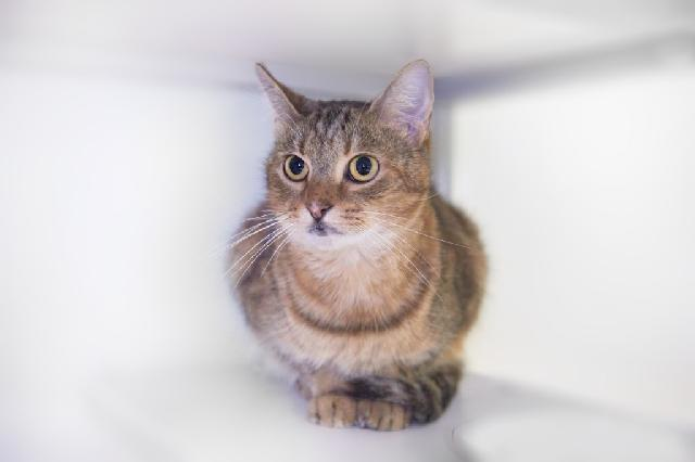 My name is Gabanna and I am ready for adoption. Learn more about me!