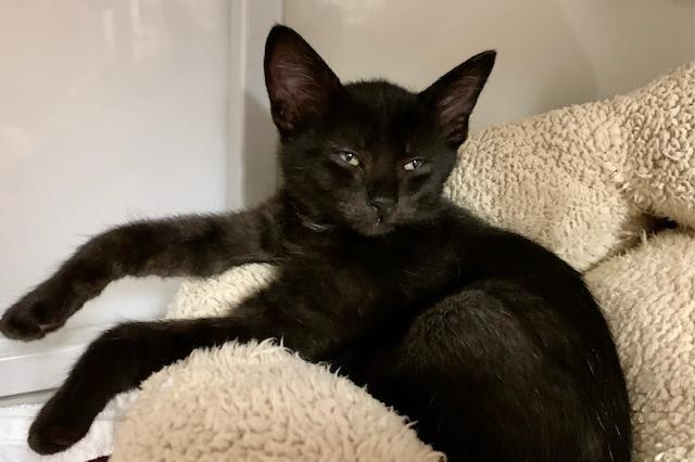 My name is Kung Pao and I am ready for adoption. Learn more about me!