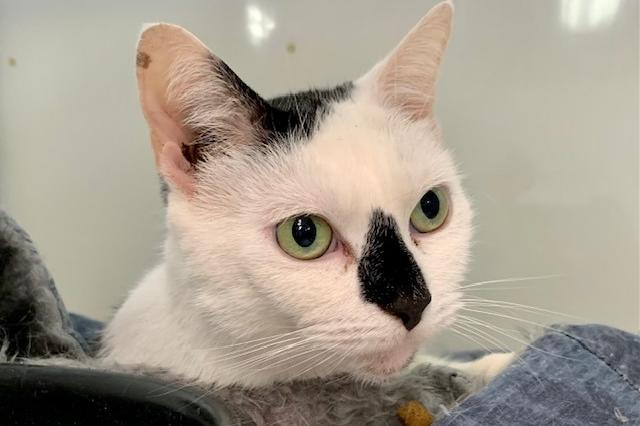 My name is Maegan and I am ready for adoption. Learn more about me!