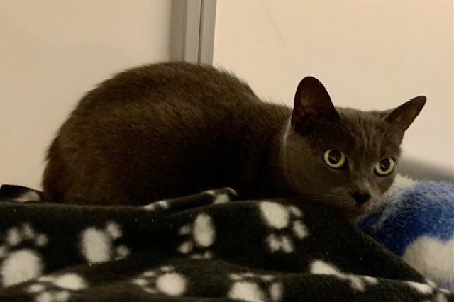 My name is Divinity and I am ready for adoption. Learn more about me!