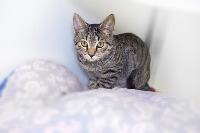My name is Turtle Cheesecake and I am ready for adoption. Learn more about me!