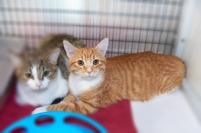 My name is Titian and I am ready for adoption. Learn more about me!