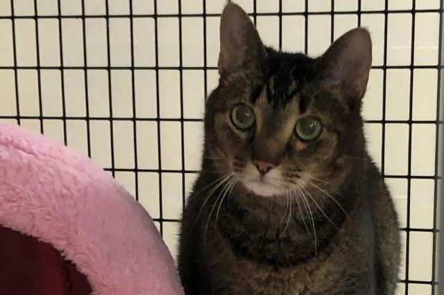 My name is Catnip (Bastet) and I am ready for adoption. Learn more about me!