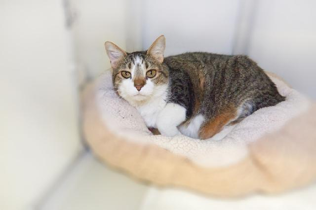 My name at SAFE Haven was Isabela and I was adopted!