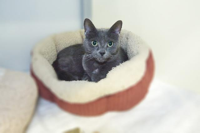 My name at SAFE Haven was Five-forty and I was adopted!