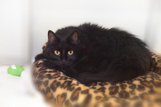 My name is Dai and I am ready for adoption. Learn more about me!