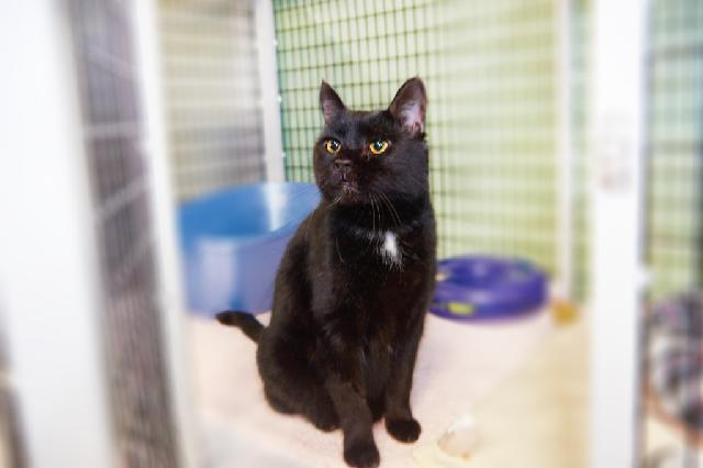 My name at SAFE Haven was Baron and I was adopted!