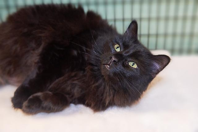 My name is Stevia and I am ready for adoption. Learn more about me!