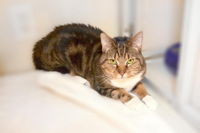My name at SAFE Haven was Mustafina and I was adopted!