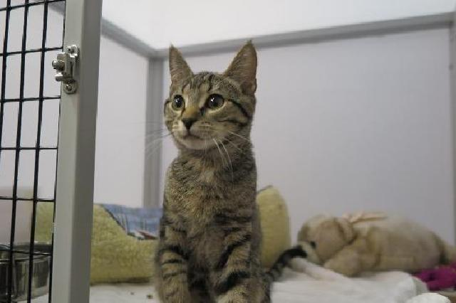 My name is Twinkle and I am ready for adoption. Learn more about me!
