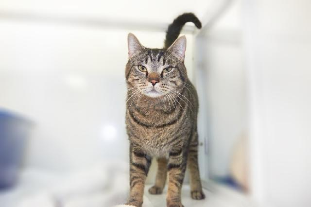My name at SAFE Haven was Billy and I was adopted!