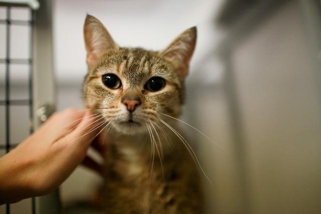 My name at SAFE Haven was Targa and I was adopted!