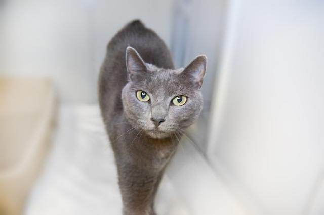 My name at SAFE Haven was Lapis and I was adopted!