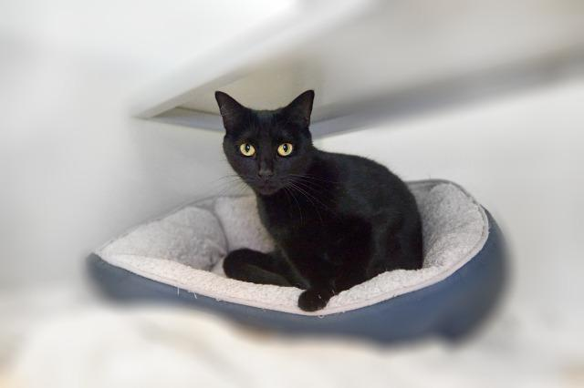 My name is Capri and I am ready for adoption. Learn more about me!