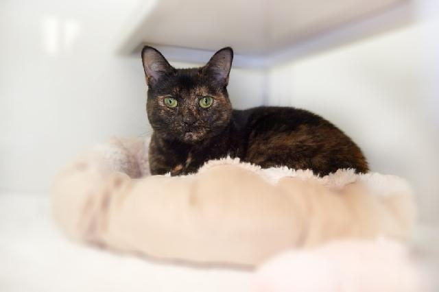 My name at SAFE Haven was Glitter and I was adopted!