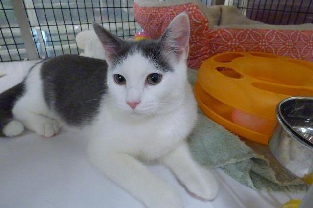 My name is Moondust and I am ready for adoption. Learn more about me!