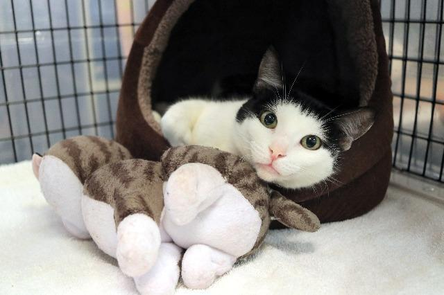 My name is Pretty Plum and I am ready for adoption. Learn more about me!