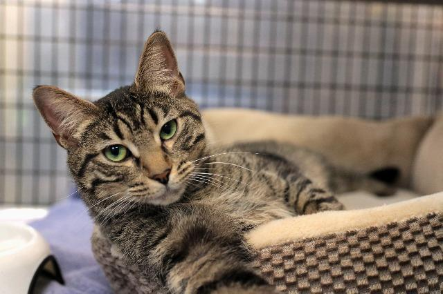 My name is Ottawa and I am ready for adoption. Learn more about me!