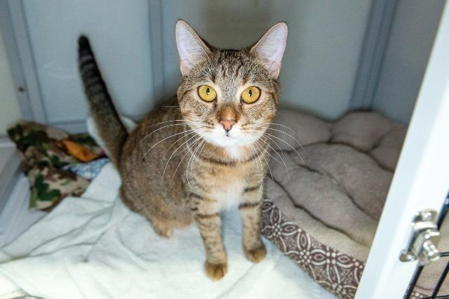 My name is Romona and I am ready for adoption. Learn more about me!