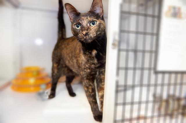 My name at SAFE Haven was Shimmering and I was adopted!