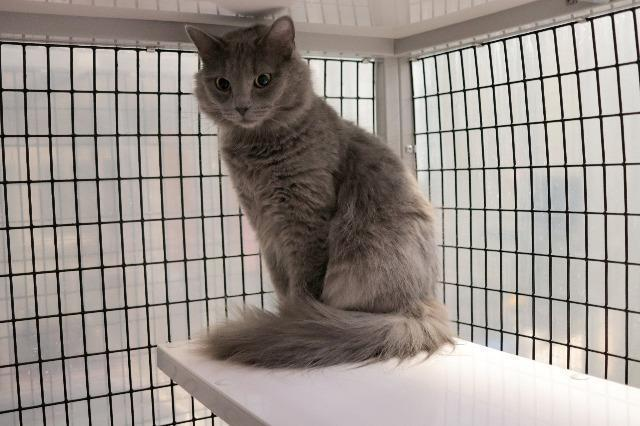 My name is Sugar Frost and I am ready for adoption. Learn more about me!