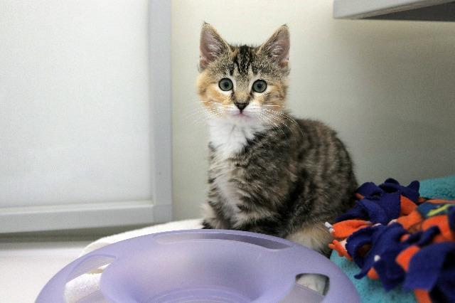 My name is Harriet and I am ready for adoption. Learn more about me!