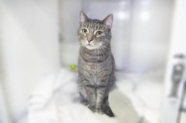 My name at SAFE Haven was Cuba and I was adopted!