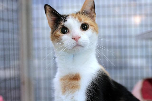 My name at SAFE Haven was Snow White and I was adopted!