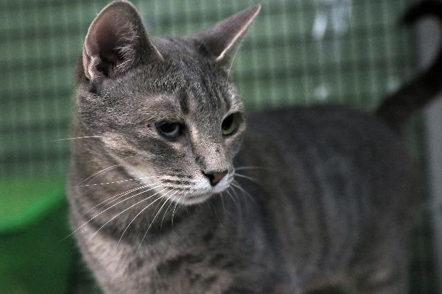 My name is Shangri-La and I am ready for adoption. Learn more about me!