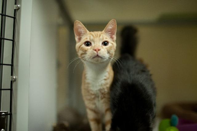 My name at SAFE Haven was Vincent and I was adopted!