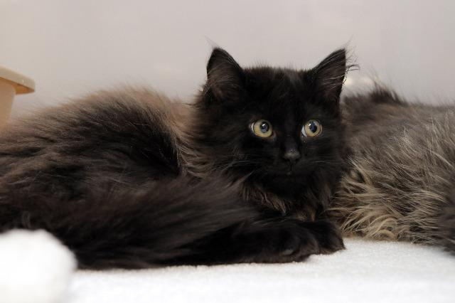My name at SAFE Haven was Sapphire Lace and I was adopted!