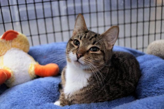 My name at SAFE Haven was Dunlop and I was adopted!