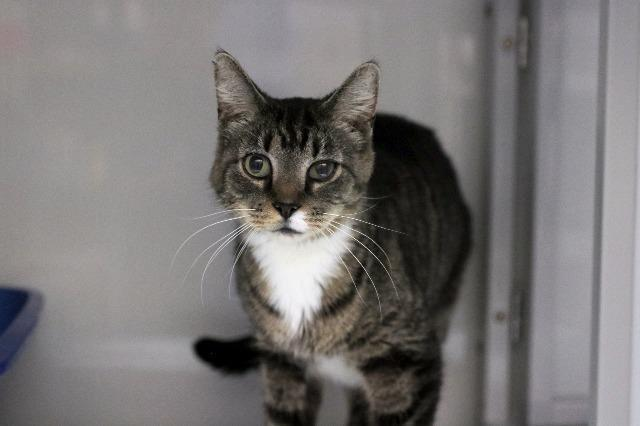 My name at SAFE Haven was Valentino and I was adopted!