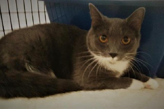 My name is Claudius and I am ready for adoption. Learn more about me!