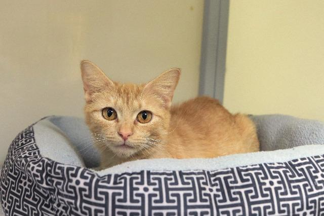 My name at SAFE Haven was Pineapple Fizz and I was adopted!