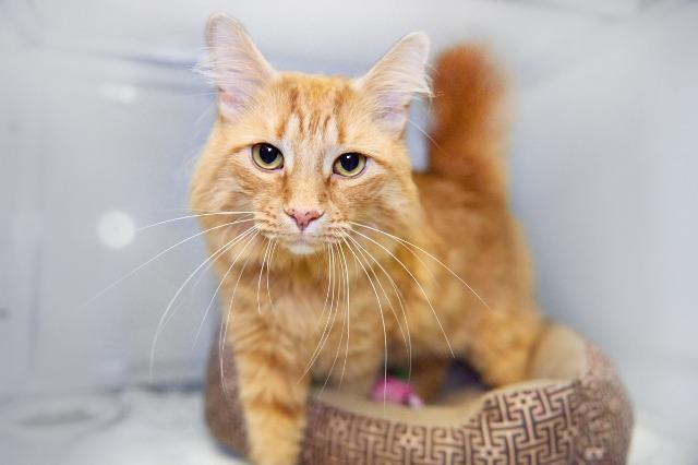 My name is Zesty Orange and I am ready for adoption. Learn more about me!