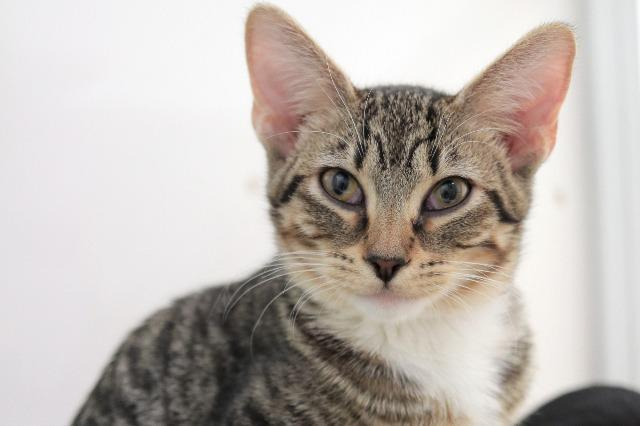 My name is Priya and I am ready for adoption. Learn more about me!