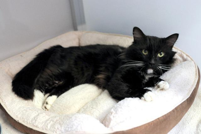My name is Mr. Fluffypants and I am ready for adoption. Learn more about me!