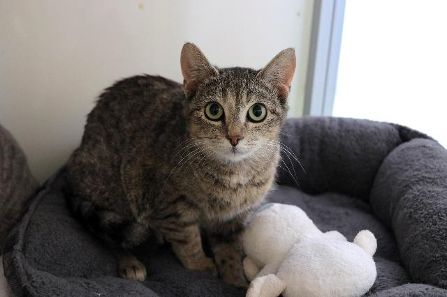 My name is Tillie Tiger and I am ready for adoption. Learn more about me!