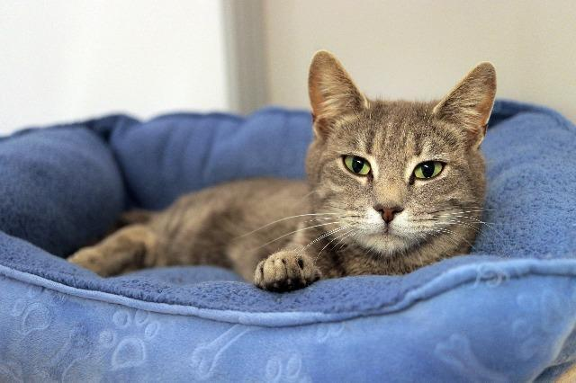 My name is Iredessa and I am ready for adoption. Learn more about me!