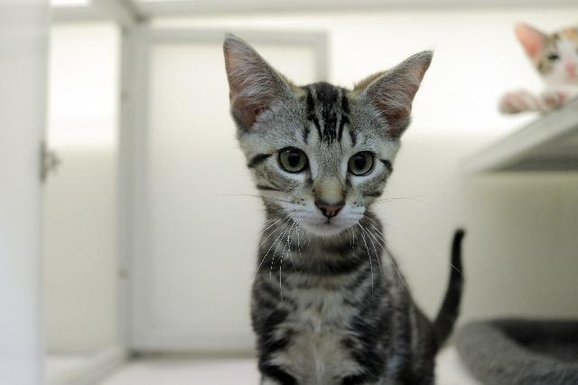 My name at SAFE Haven was Dragonfly and I was adopted!