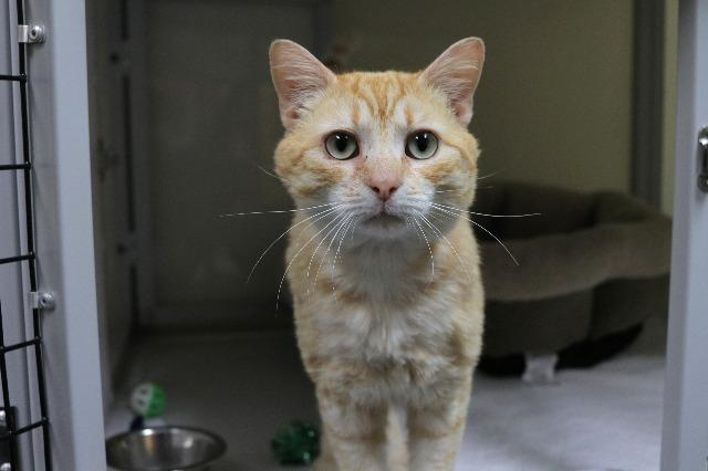 My name at SAFE Haven was Merlin Jones and I was adopted!