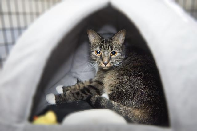 My name is Honey Lilac and I am ready for adoption. Learn more about me!