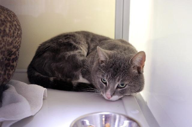 My name is Bob and I am ready for adoption. Learn more about me!