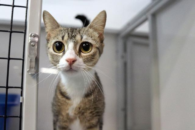 My name at SAFE Haven was Elizabeth Taylor and I was adopted!