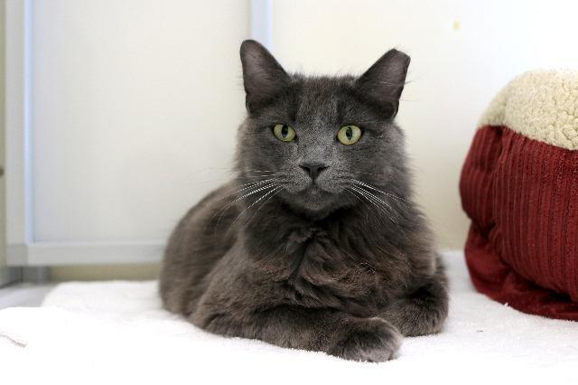 My name at SAFE Haven was Kit Cloudkicker and I was adopted!