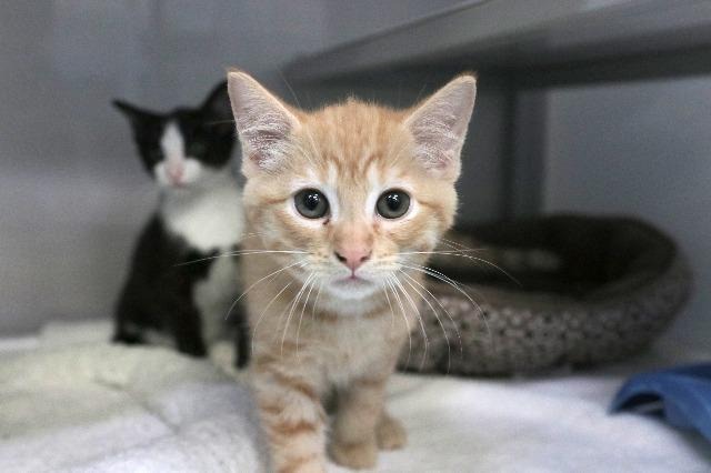 My name at SAFE Haven was Nougat and I was adopted!
